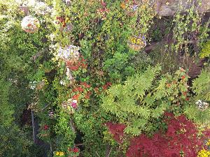 Jardines verticales y cubiertas verdes